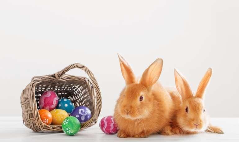 Króliczki Wielkanocne